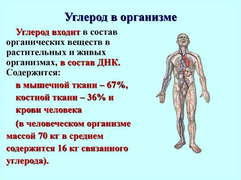 Углерод в организме