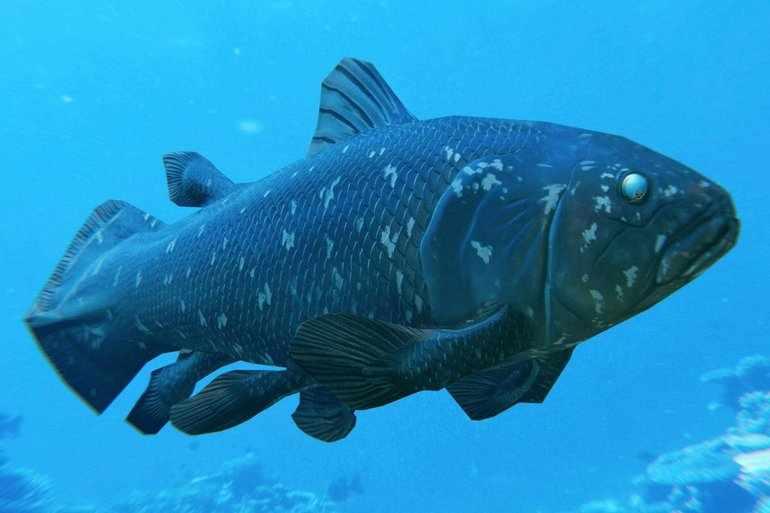 Древнейшие рыбы Тихого океана