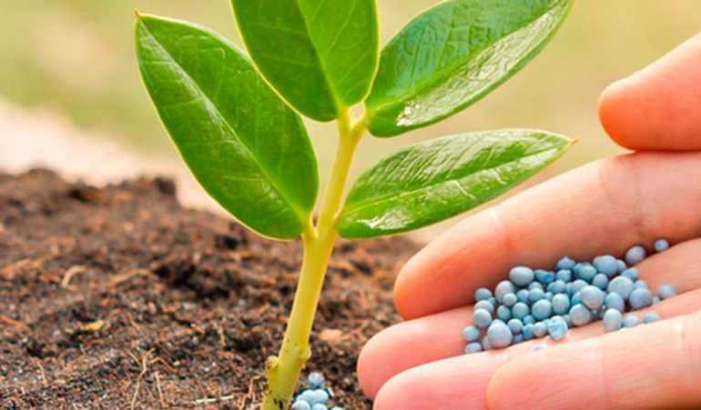 Минеральное питание растений и значение воды