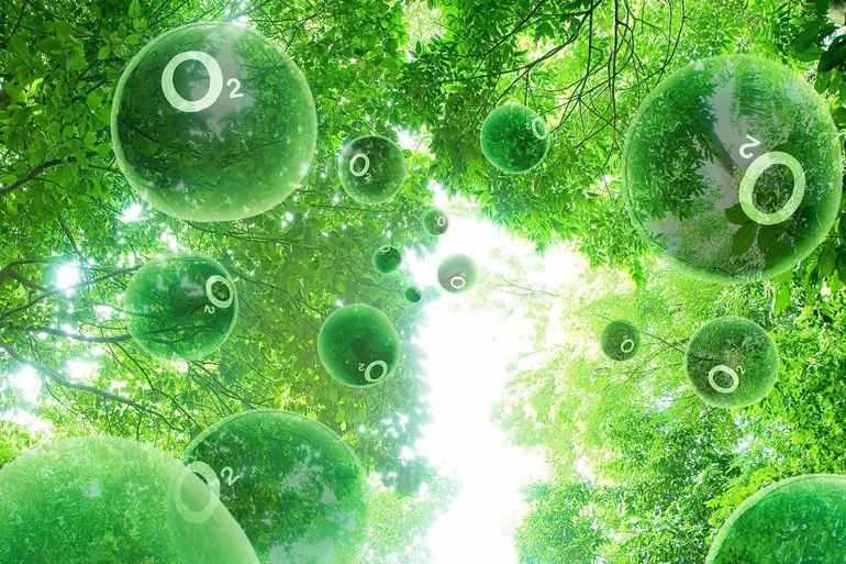 Выработка кислорода растениями