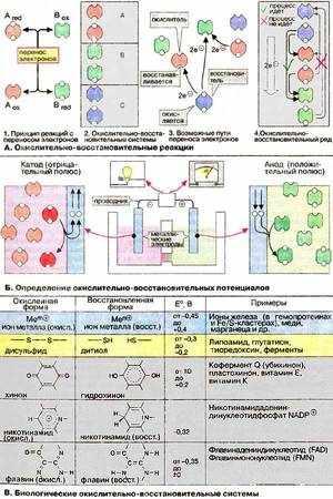 Химические процессы