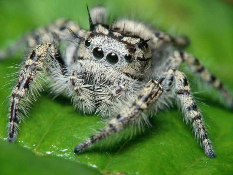 Пищеварительная система паукообразных