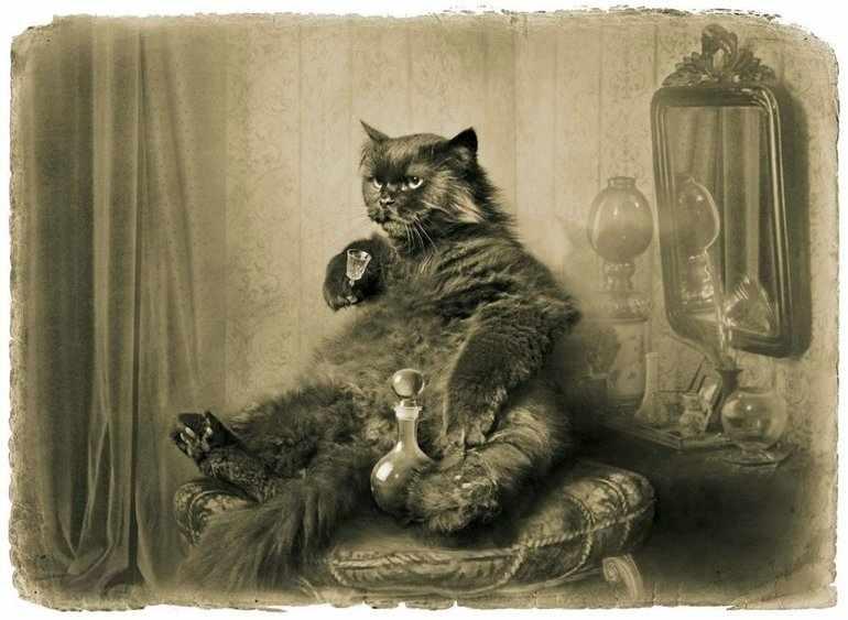 Кот из мастера и маргариты