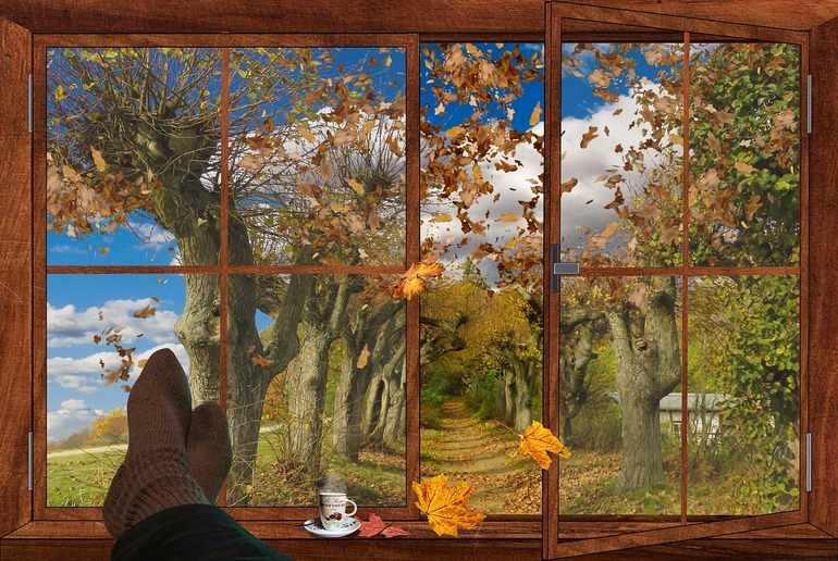 «Вид из моего окна осенью»