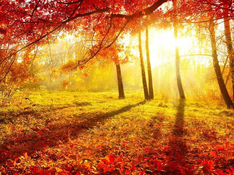 Природа в коротких стихах Пушкина про осень