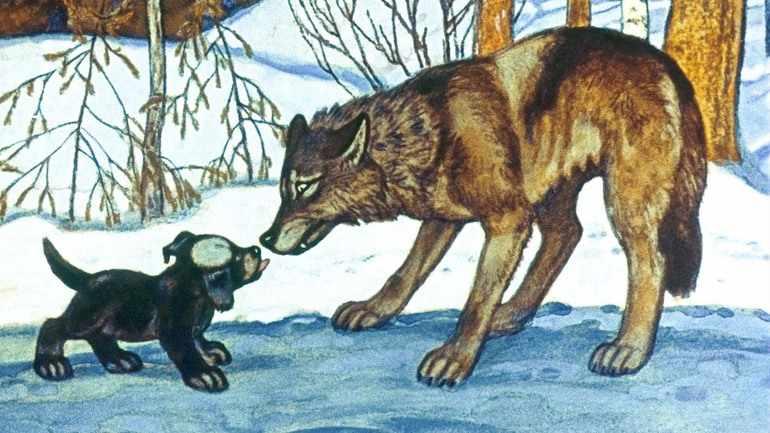 Белолобый и волчица