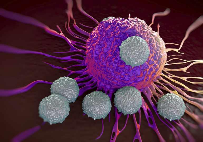 Т- лимфоциты обеспечивают неспецифическую устойчивость