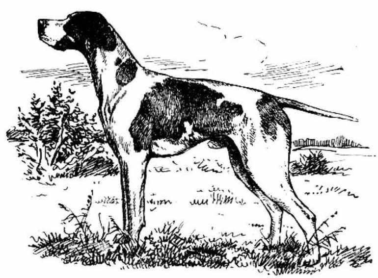 Собака Валетка