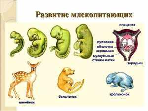 Эволюция млекопитающих