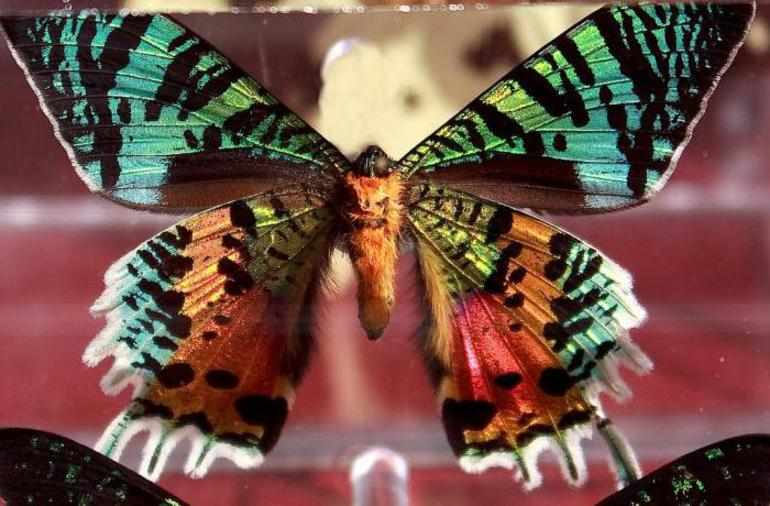 Платонов разноцветная бабочка главные герои