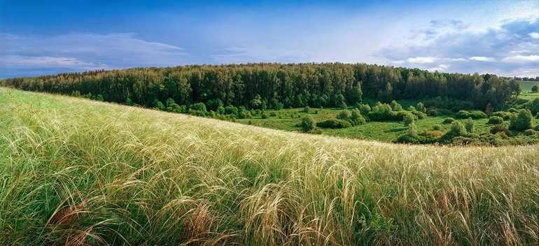 Лес и степь краткое содержание
