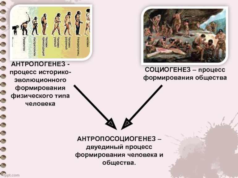 Стадии эволюции человека таблица