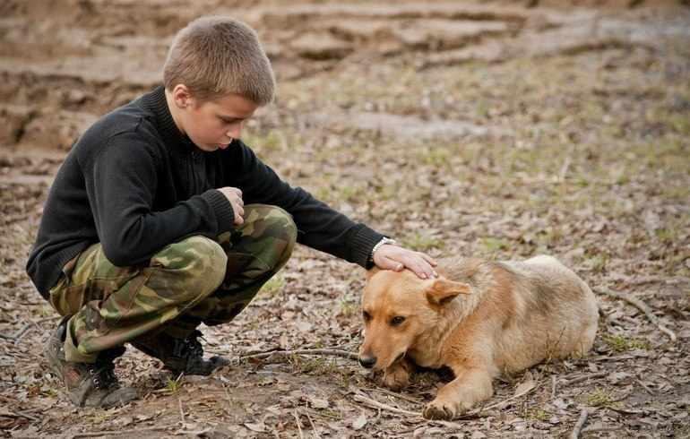 Сострадание — это особое качество человеческой души