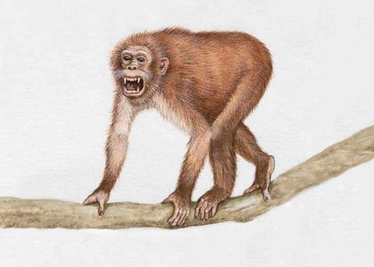 Эволюция человека таблица по биологии