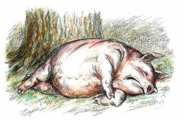 Свинья является символом невежества и жадности