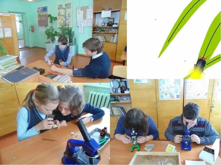 Изучение бактерий на уроке биологии