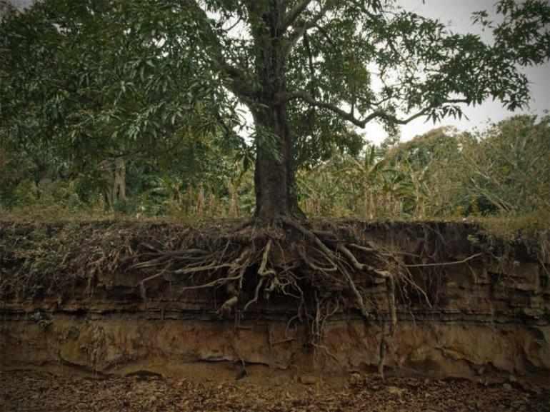 анализ и мораль басни листы и корни