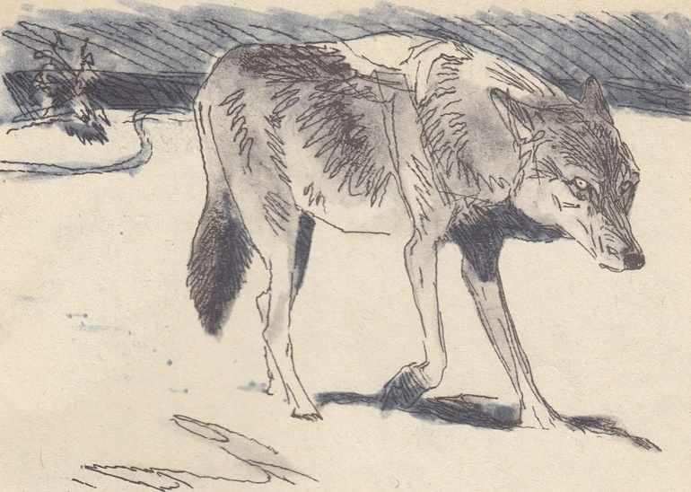 Знакомство с волчицей